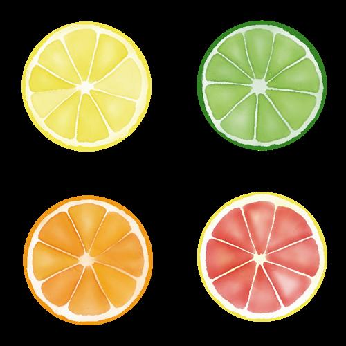 柑橘類の輪切りのイラスト素材