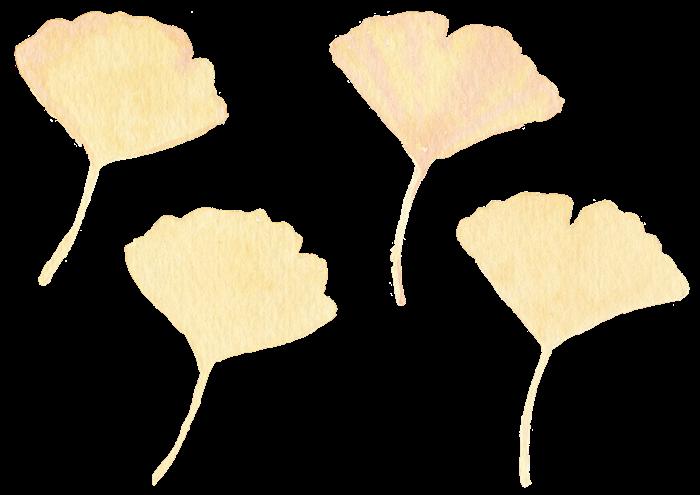 イチョウの水彩イラスト素材
