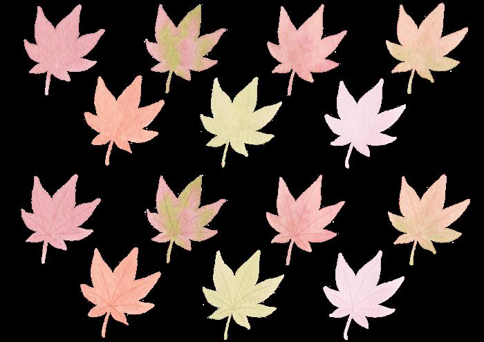 もみじの水彩イラスト素材