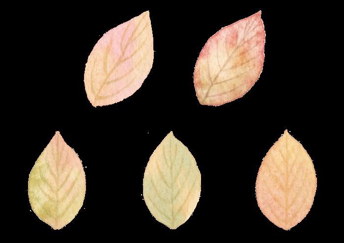 葉っぱの水彩イラスト素材